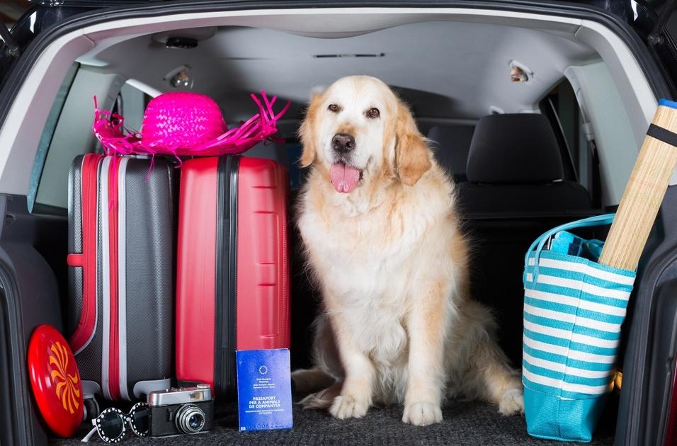 Consejos para viajar con tu perro en el coche
